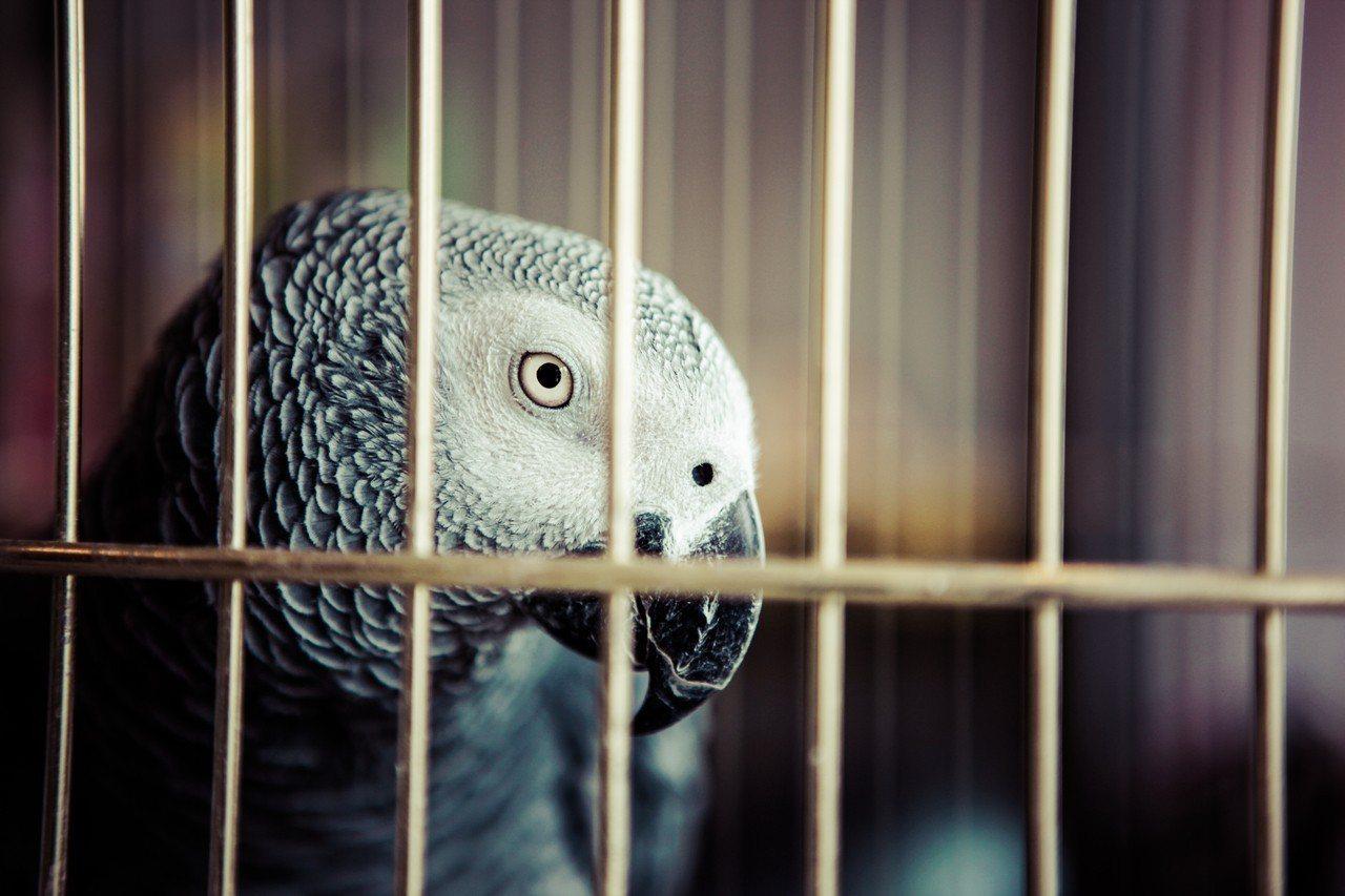 鳥園老闆一聽到客人要放生鸚鵡做功德,氣得立馬掛電話並霸氣回應不賣。圖/ingim...