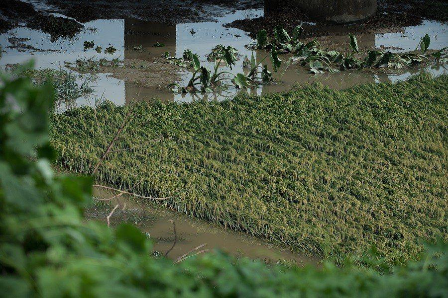 農委會表示,農林漁牧業總損失超過7億元,但整體蔬菜未來供貨充裕,不至對物價造成太...