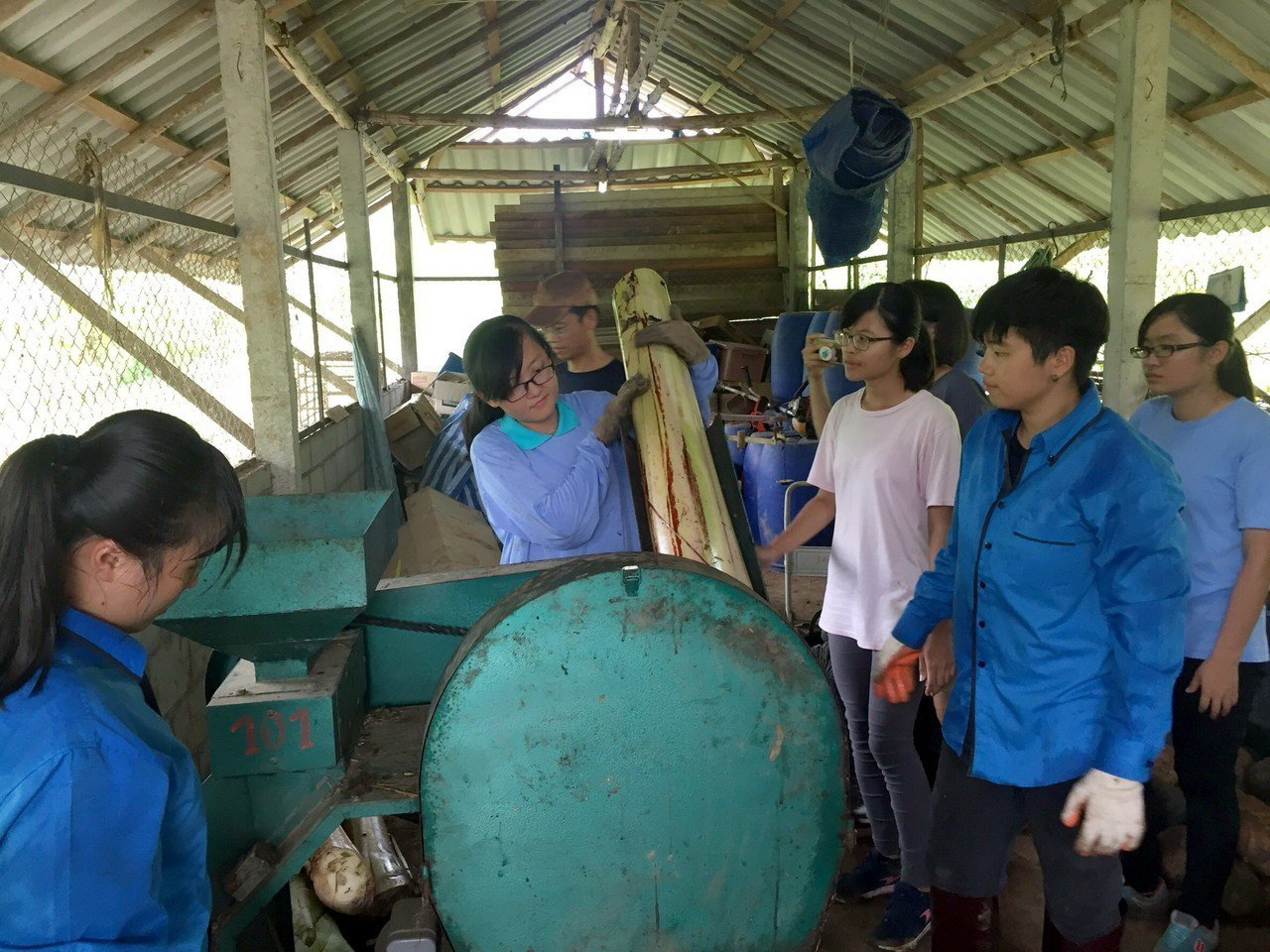 學生深入泰北實習,學生以機器切香蕉蕉筒製作野豬飼料。圖/南華大學提供