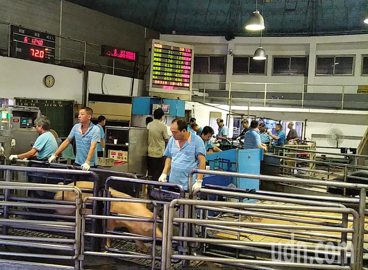 中南部豪雨波及豬隻泡水,網路傳影響中秋肉品供應,桃園肉品市場連日拍賣價格、頭數維...