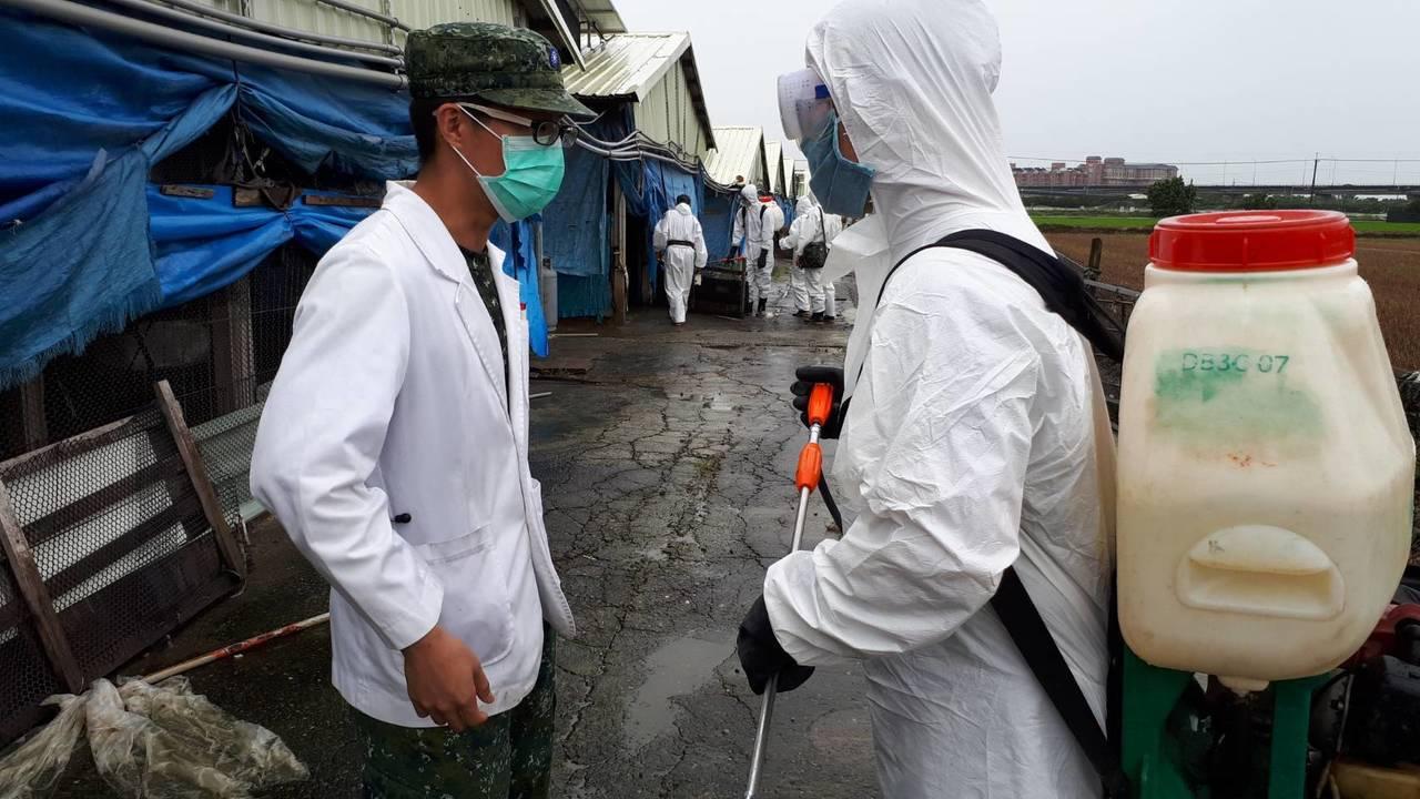 國軍參與災後清運家禽與環境清毒工作。圖/陸軍八軍團提供