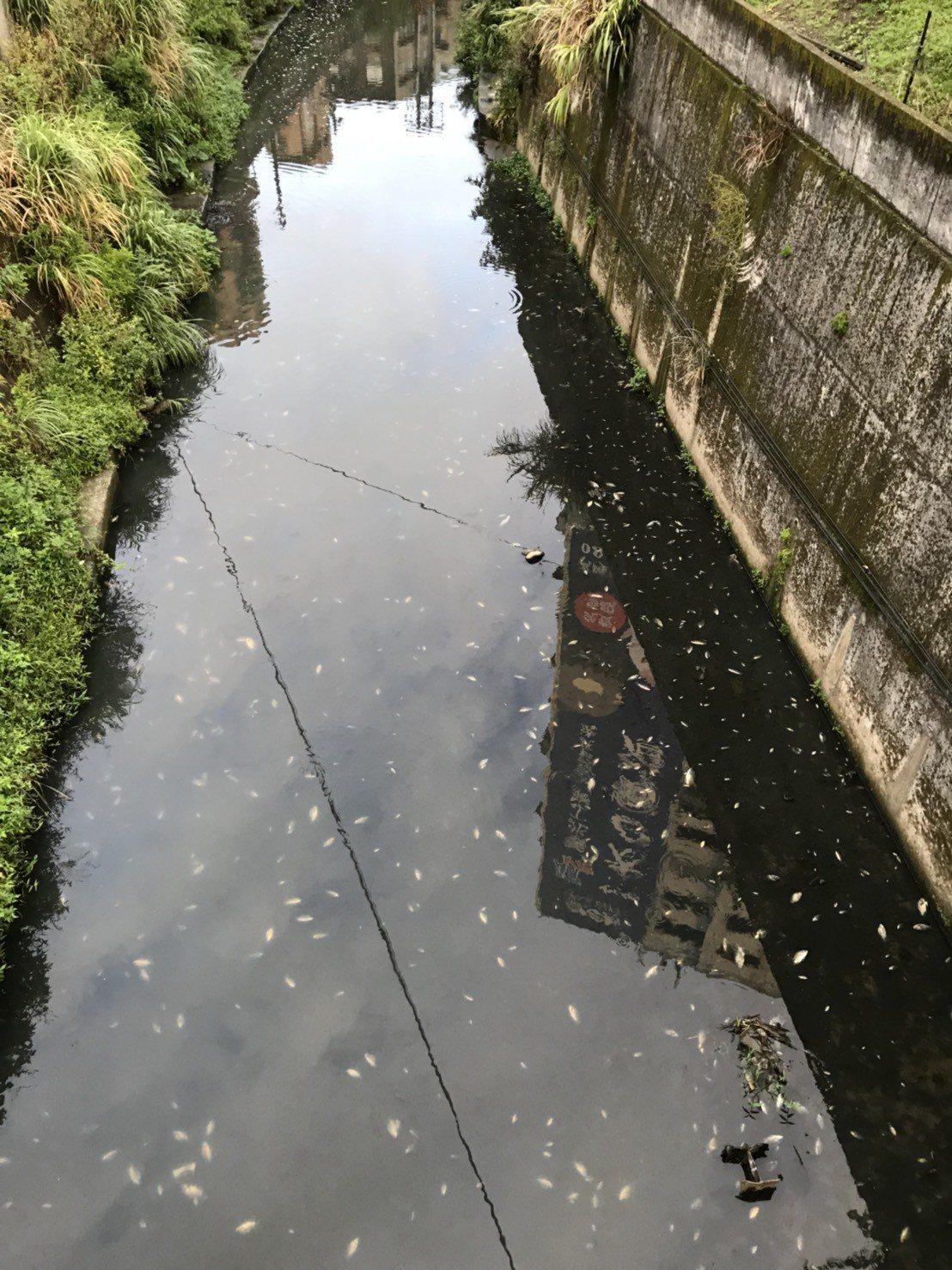 基隆大武崙溪數千魚群死亡 疑廠商排放廢水。記者游明煌/翻攝