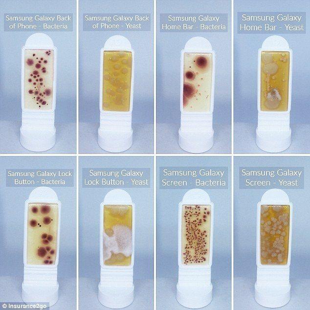 圖為三星Galaxy 8手機不同位置的細菌和酵母菌,在螢幕上發現最多細菌(下排,...