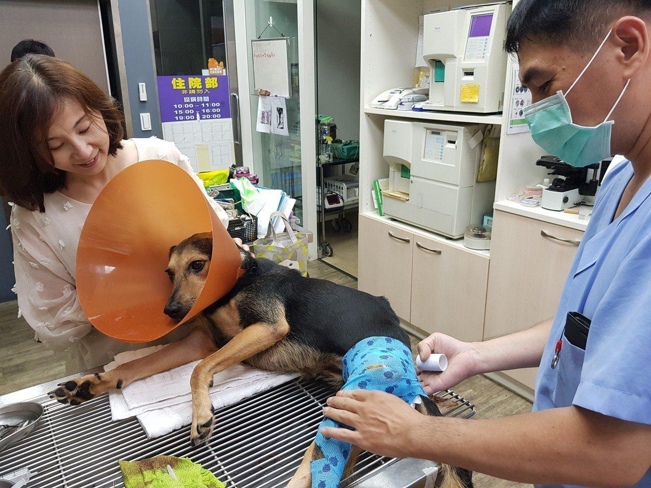 台灣幸福狗流浪中途協會,由人稱「陳愛媽」的陳淑娟發起,已經營逾十年,至今協助近千...