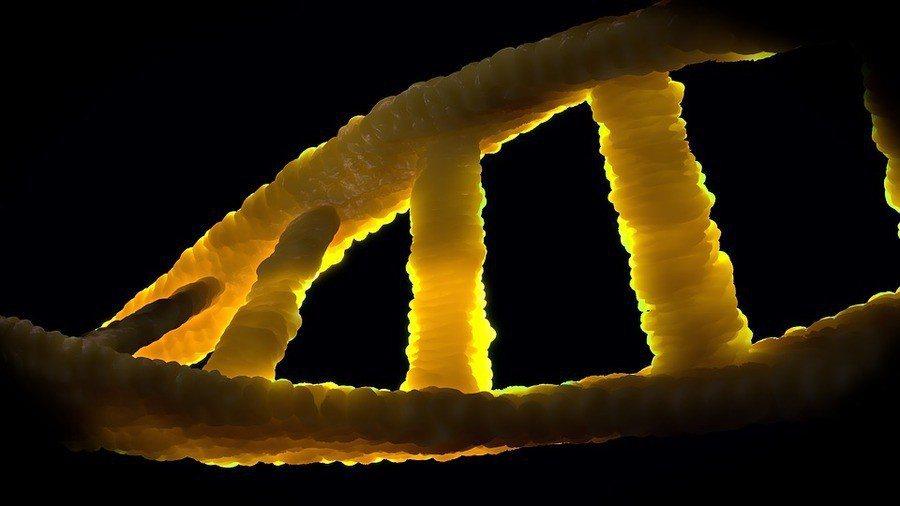 科學家們首次利用基因編輯技術治療大型哺乳動物的杜顯氏肌肉萎縮症,並成功恢復抗肌肉...