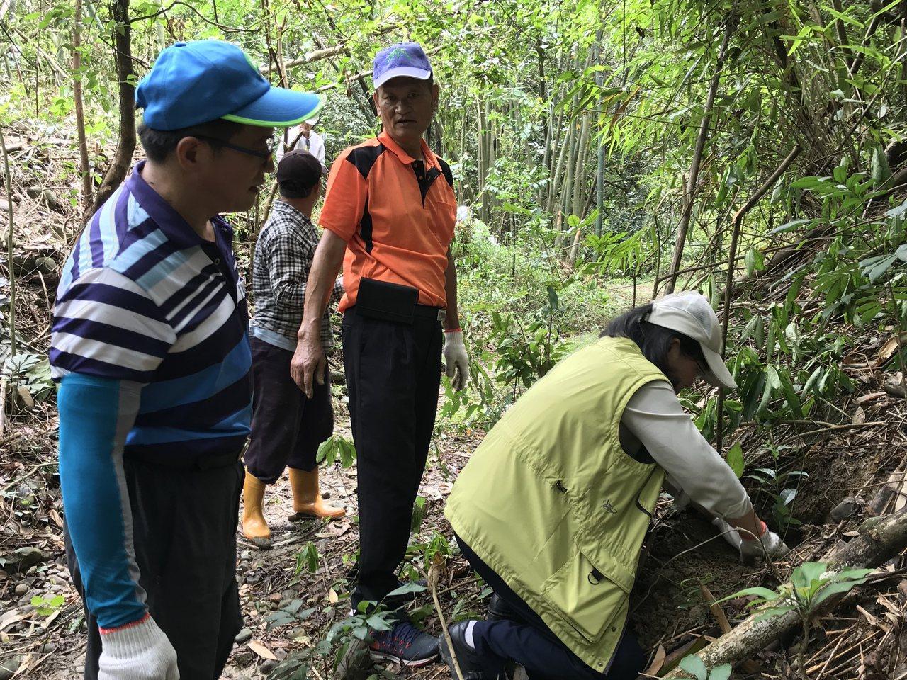 林務局與林試所合作,六龜十八羅漢山栽種50株山茶當教材。記者徐白櫻/翻攝