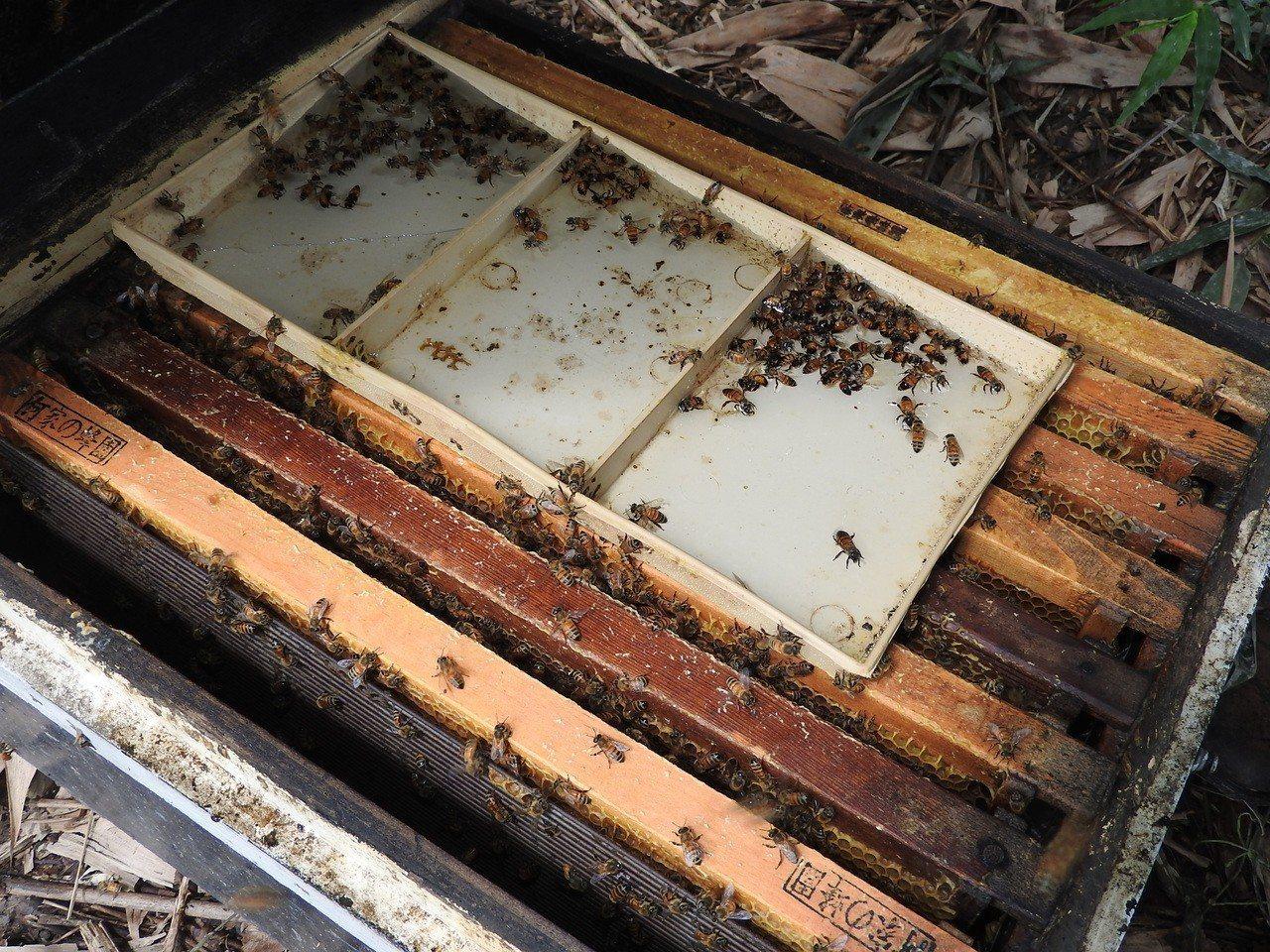 埔里陳姓蜂農的養蜂場也受災,勉強飛回巢的蜜蜂在蜂箱外掙扎顫抖,最終難逃一死。記者...