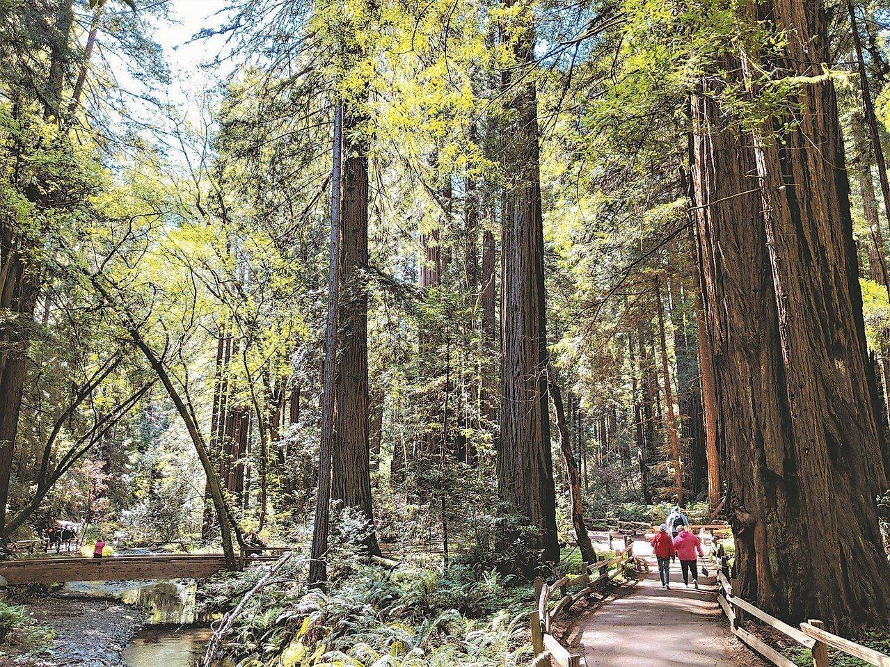 紅木森林國家公園健走步道。 圖/有行旅提供