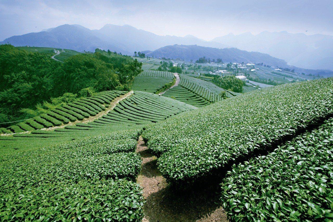 瑞峰海鼠山茶園。