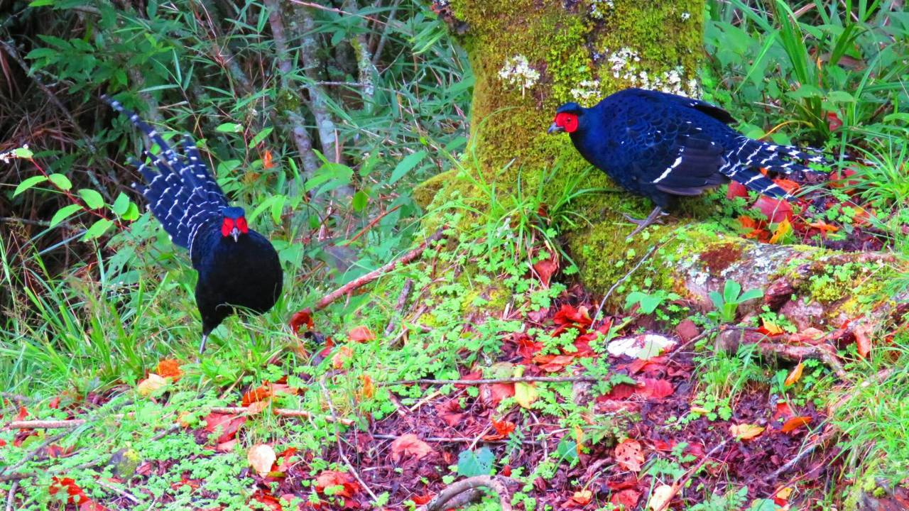 荒野保護協會嘉義分會解說員兼林務局國家森林志工蘇家弘,在海拔逾2000公尺的阿里...