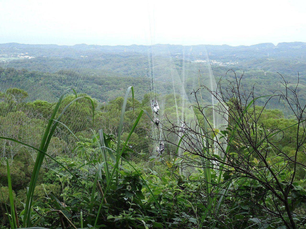 苗栗縣通霄鎮山區同一地點,日前第三度發現鳥網,圖/新竹林管處余建勳提供