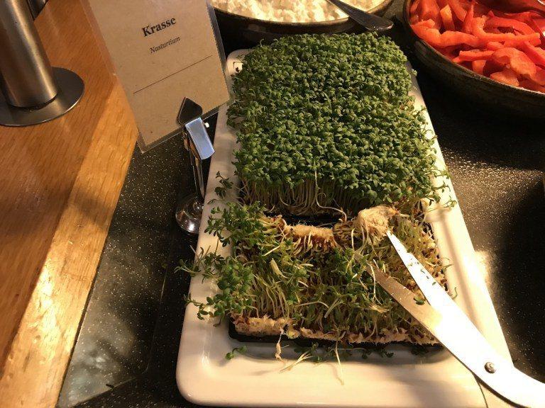 什麼叫做新鮮,就是自己剪菜吃!這個是Watercress,不是苜蓿芽,吃起來有點...