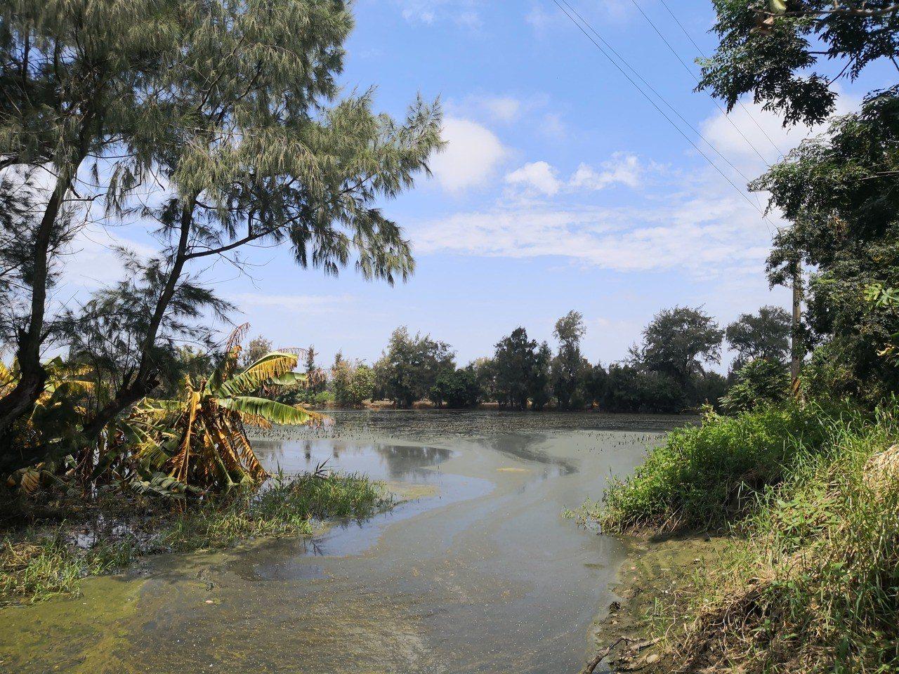 嘉義縣823水災至今半個月,位處偏僻地勢低的東石鄉國家鰲鼓濕地,部分積水未消退,...
