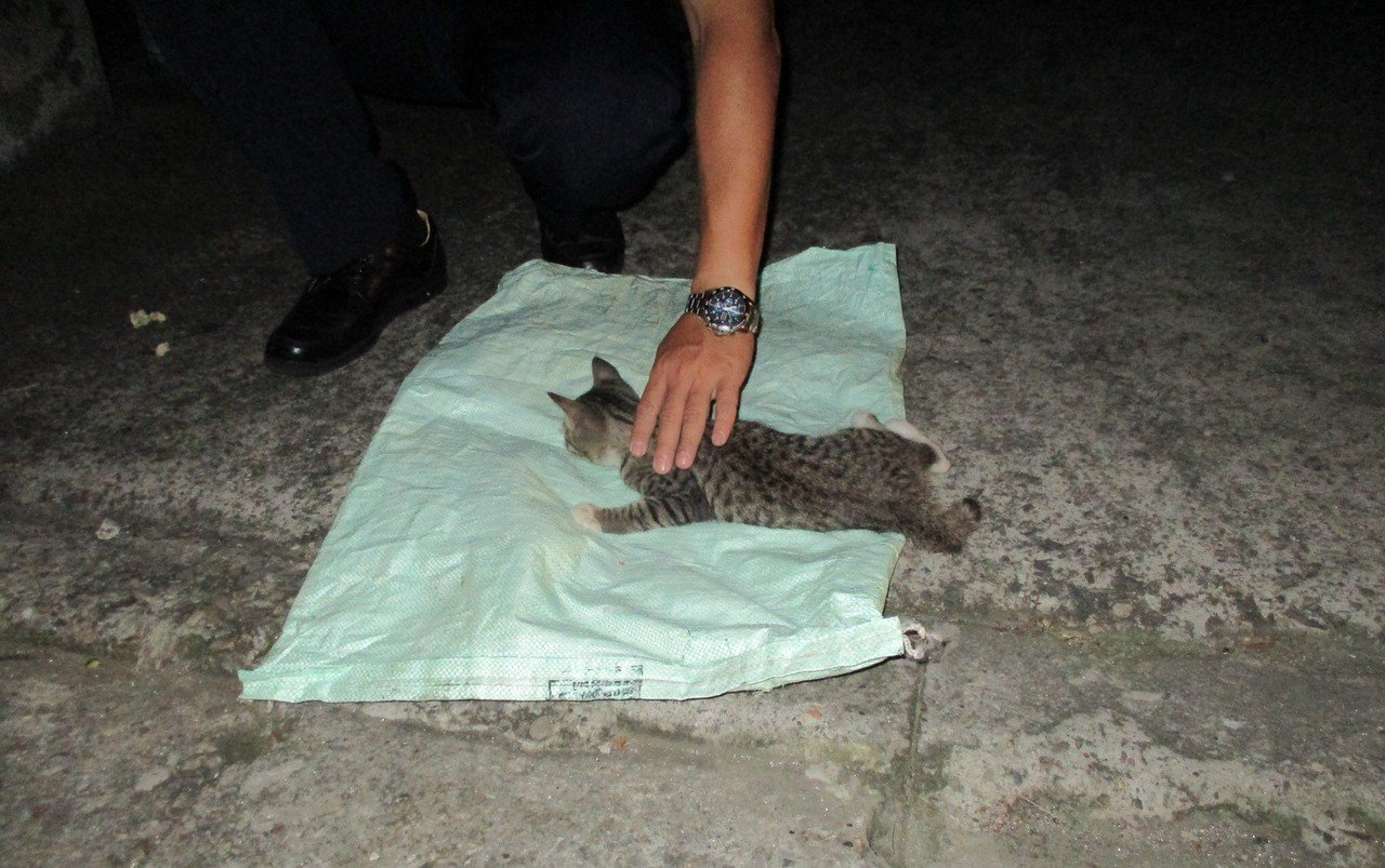 桃園市平鎮警分局警員到超商簽巡時,發現有幼貓受傷趴在路旁哀嚎,與熱心民眾一同將傷...