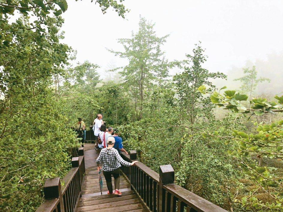 大崙山步道沿途種植大片銀杏林,雲霧縹緲,行走其中,令人身心舒暢。 記者江良誠/攝...