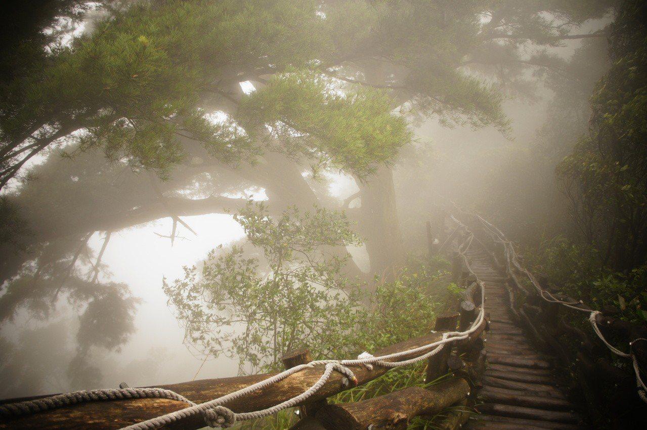 大坑五號登山步道,是絕佳的登山賞景地點。圖/台中市風景管理所提供