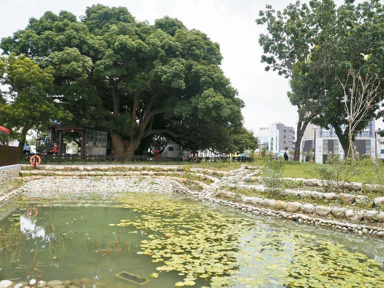 台中市建設局打造「茄苳樹王文化生態公園」,有親水空間、大面積陽光草坪。 記者喻文...