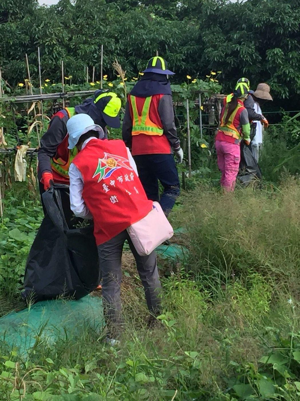 台中市政府昨天再次動員200多人至大里開心農場清除孳生源。圖/台中市衛生局提供