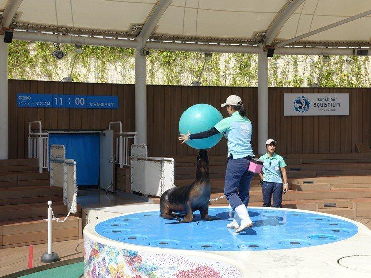 海獅表演秀。圖/記者張芳瑜攝影