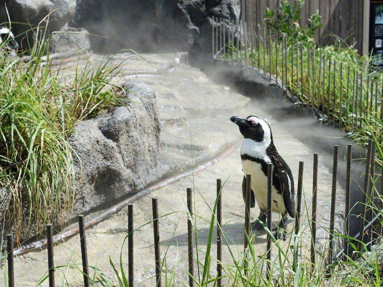 「草原企鵝」與企鵝超近距離觀賞。圖/記者張芳瑜攝影