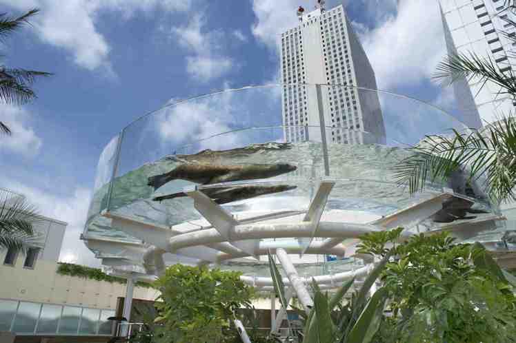 可以看見海獅悠游頭上的「陽光環形水槽」。圖/Sunshine City