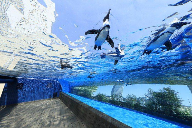 彷彿看見企鵝在天空悠游的「天空企鵝」。圖/Sunshine City