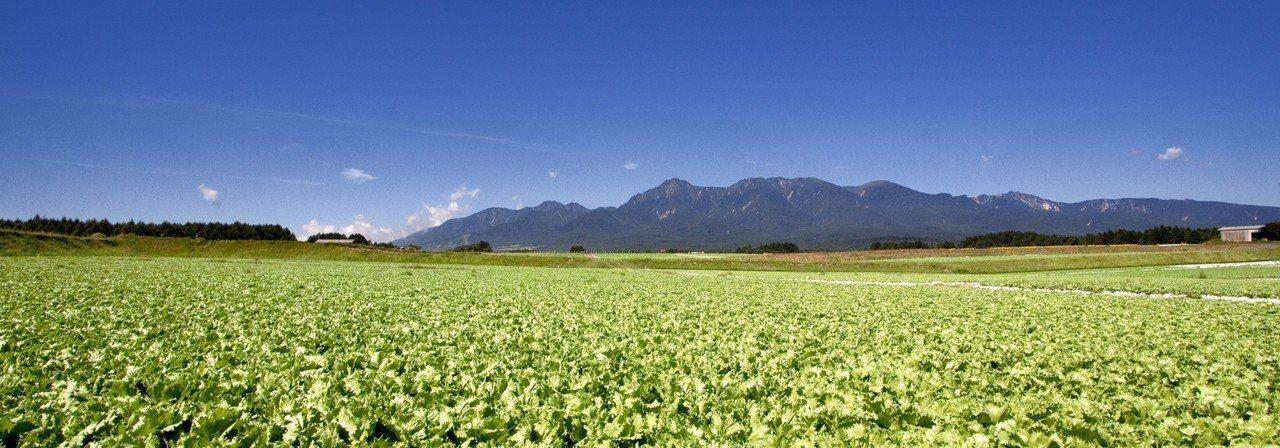 日本川上村以種植高原野菜聞名。圖/翻攝自川上村官方網站