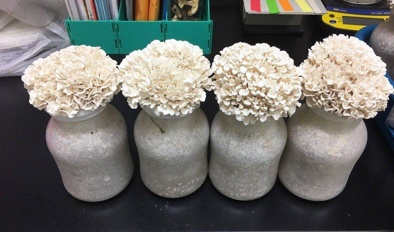 為利於自動化生產,工研院特別針對白舞菇的生長特性開發出新型栽培瓶,除了特別設計瓶...