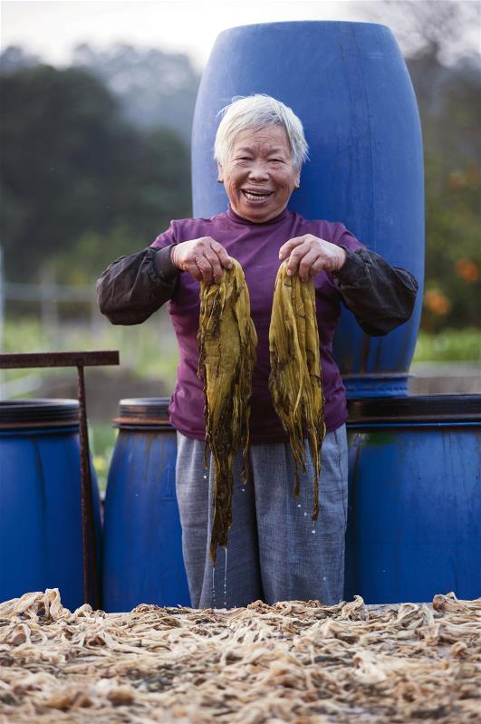 客家菜餚中使用醃製福菜,反映客家人儉樸與珍惜食物的精神。 (莊坤儒攝影)