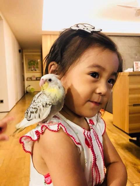 咘咘上個月3歲生日時,爸媽修杰楷及賈靜雯送給她小鳥當生日禮物,希望她學習愛惜生命及責任感。一個月過去,賈靜雯分享咘咘的「養鳥日記」,笑說「咘姐最近公主瘋連鳥站肩膀都是公主臉。」興奮笑臉迷倒粉絲;有趣...
