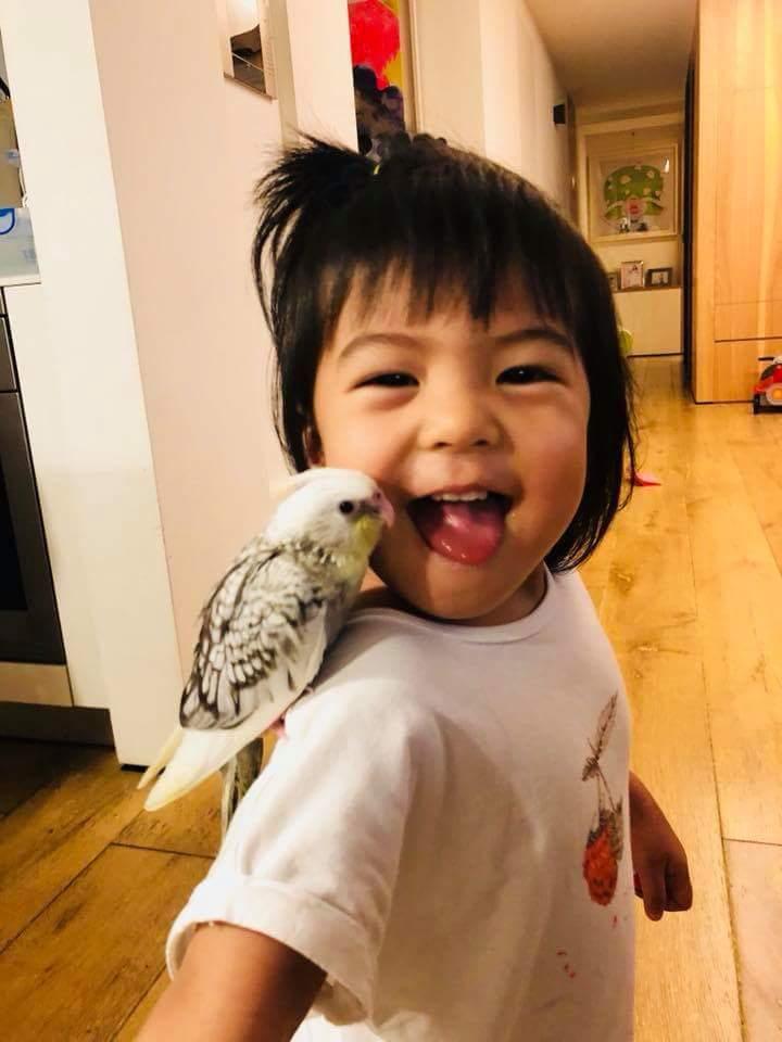 波妞頑皮伸出舌頭想舔小鳥。圖/摘自臉書