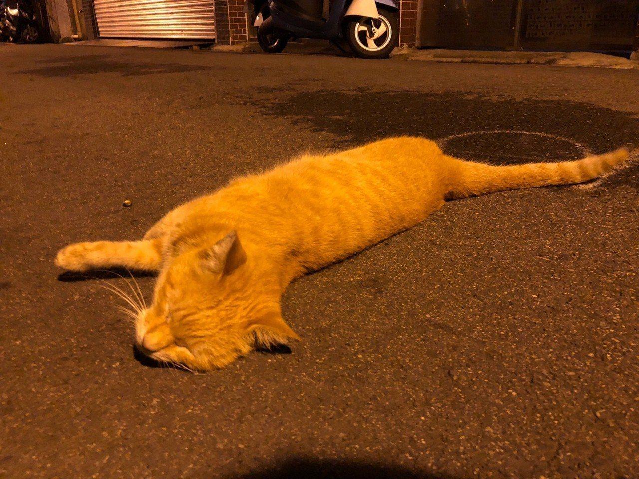 貓咪示意圖,非當事貓。圖/報系資料照