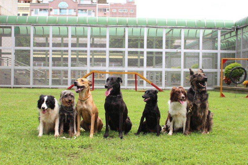 示意圖。台中市動保處推出「花開Let's狗」認養浪浪專案,只要認養犬或貓,即可獲得花博門票1張。 聯合報系資料照/記者張雅婷攝影