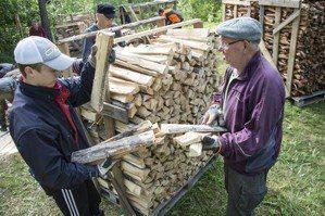 芬蘭現代林業困境:原始林、松樹林與松茸如何共存?