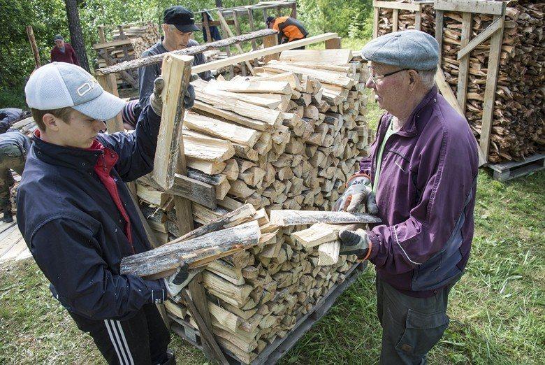 人類與松樹(以及它們的菌根盟友)在芬蘭存在的歷史長度相近,約9000年。 圖/歐...