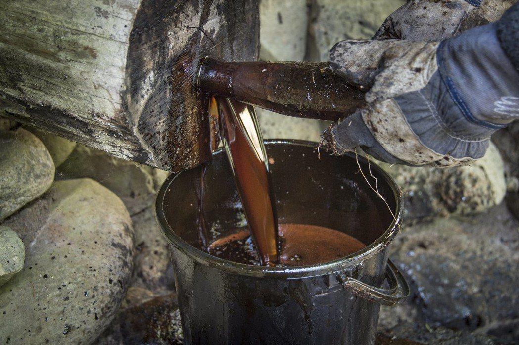由松樹製作成的焦油。 圖/歐新社