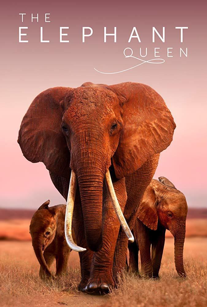 紀錄片《大象女王》。網路照片