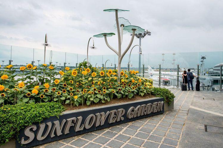 多次被選為全球最佳機場的樟宜機場。圖/新加坡樟宜機場提供