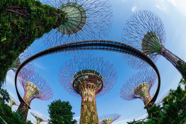 濱海灣花園有18棵高聳的擎天樹。圖/新加坡旅遊局提供