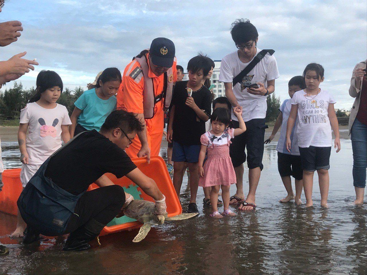國立海洋生物博物館與海巡人員8日共同在屏東車城鄉野放照護近半年的4隻海龜。圖/海...