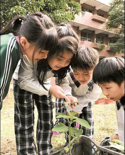 南投國小106學年度「咱糧學堂」,融入自然領域課程,學生正在觀察芝麻。 圖/全教...