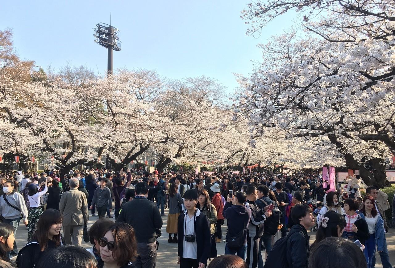 日本近年來一直位居國人出國旅遊目的地第一名。 本報資料照片/記者胡經周攝影