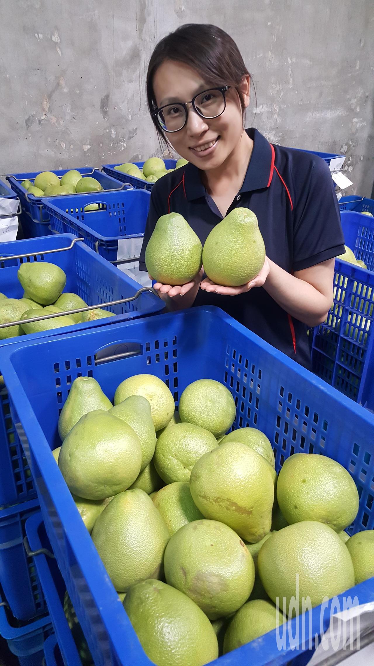 苗栗縣西湖鄉文旦柚今年豐收且品質佳,農會連日來忙著出貨。記者胡蓬生/攝影