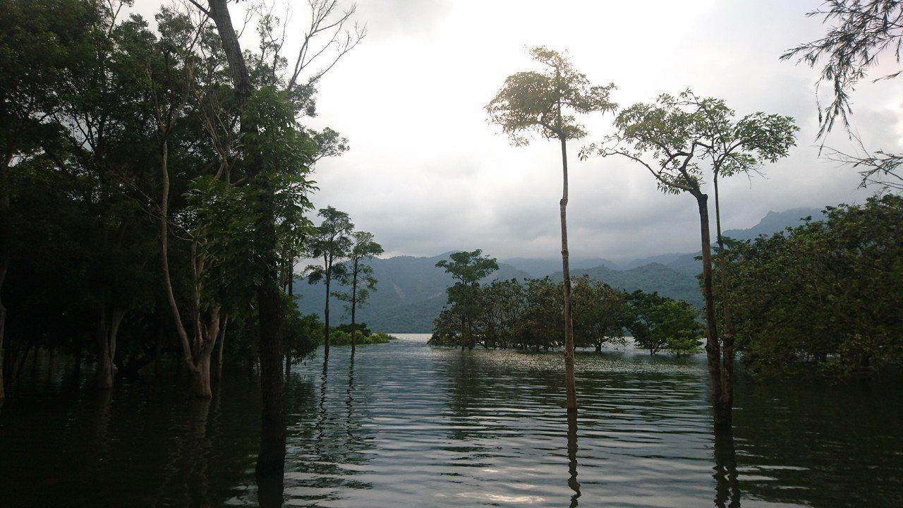 位於曾文水庫上游的大埔鄉,水位上升淹沒許多原本的岸邊地區,圖/施忠志提供
