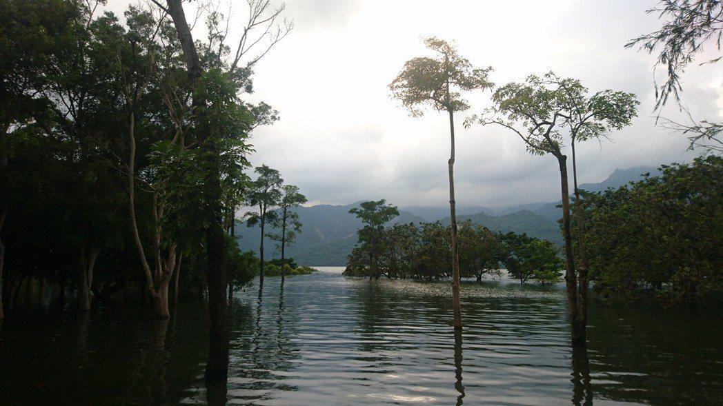 位於曾文水庫上游的大埔鄉,水位上升淹沒許多原本的岸邊地區。 圖/施忠志提供