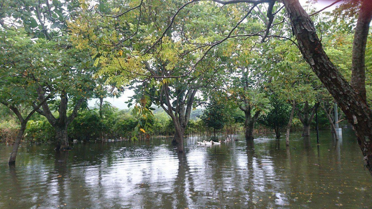 曾文水庫大壩加高水位上升,在大埔湖濱公園等地形成「水漾森林」。圖/施忠志提供
