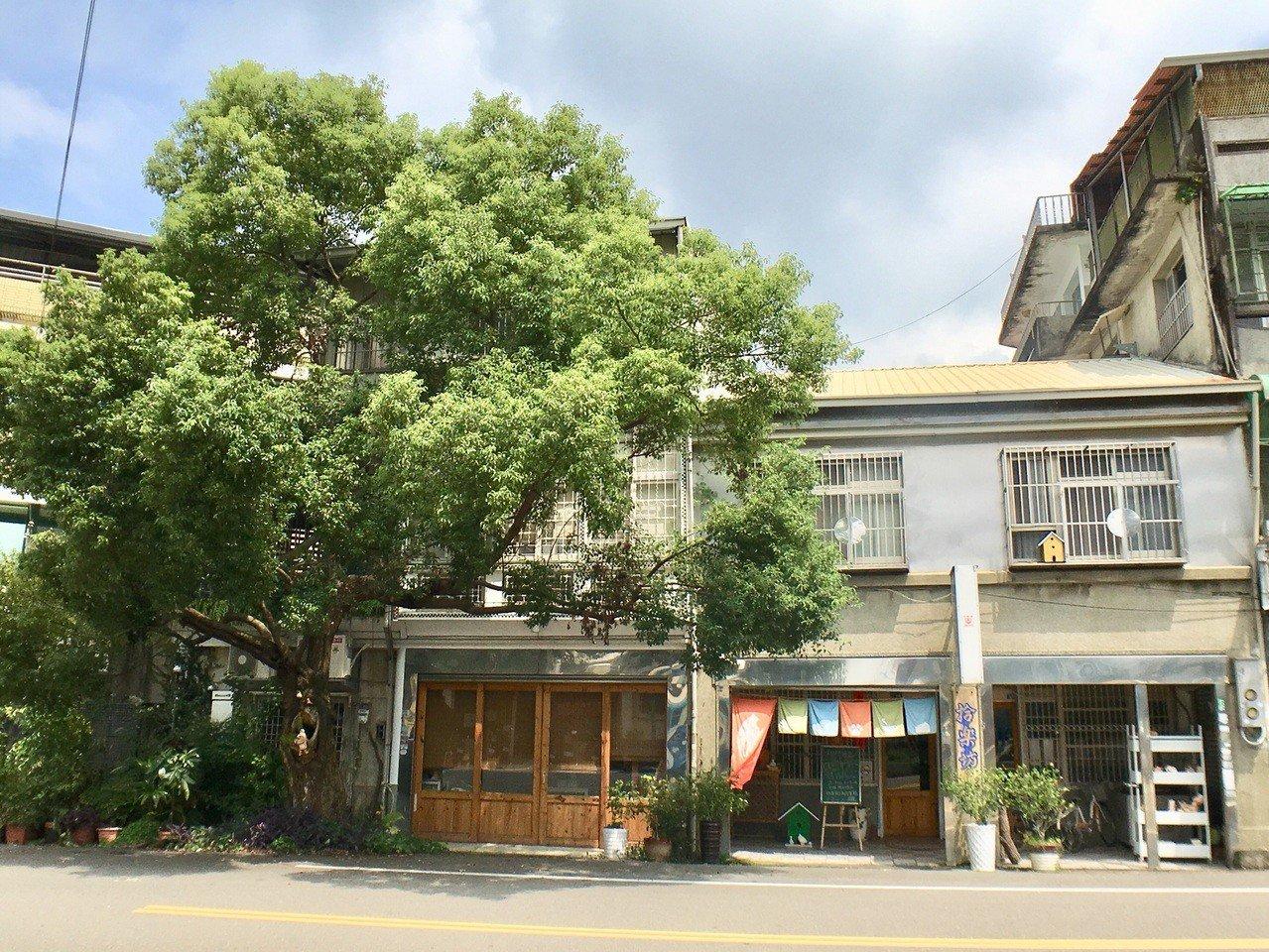 新竹縣北埔街上,一間屋齡超過八十年歷史的咖啡館,門前佇立著一棵三層樓高的老樟樹。...