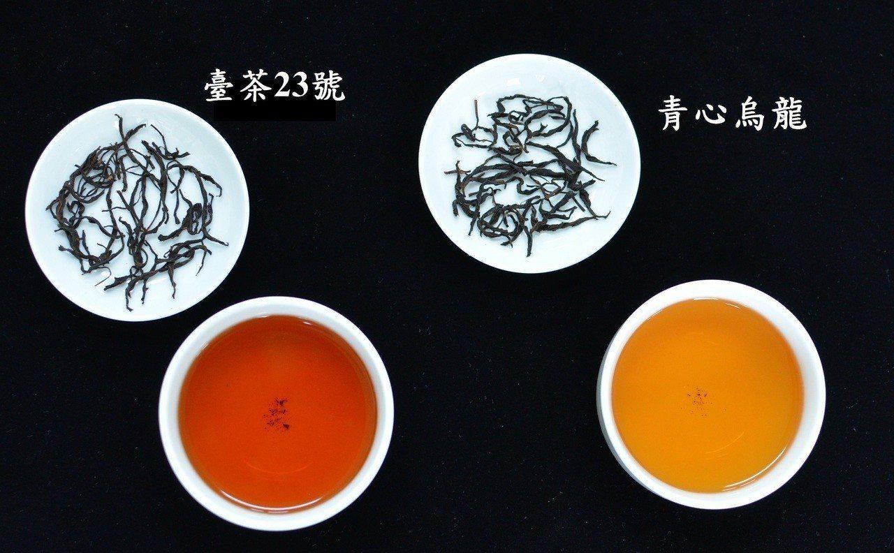 台茶23號成茶與茶湯。圖/茶改場提供