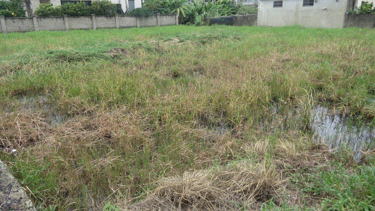 苗栗市玉維路、復興路3段路口附近的廢耕農田,今年成了大量馬陸棲身之地。記者范榮達...