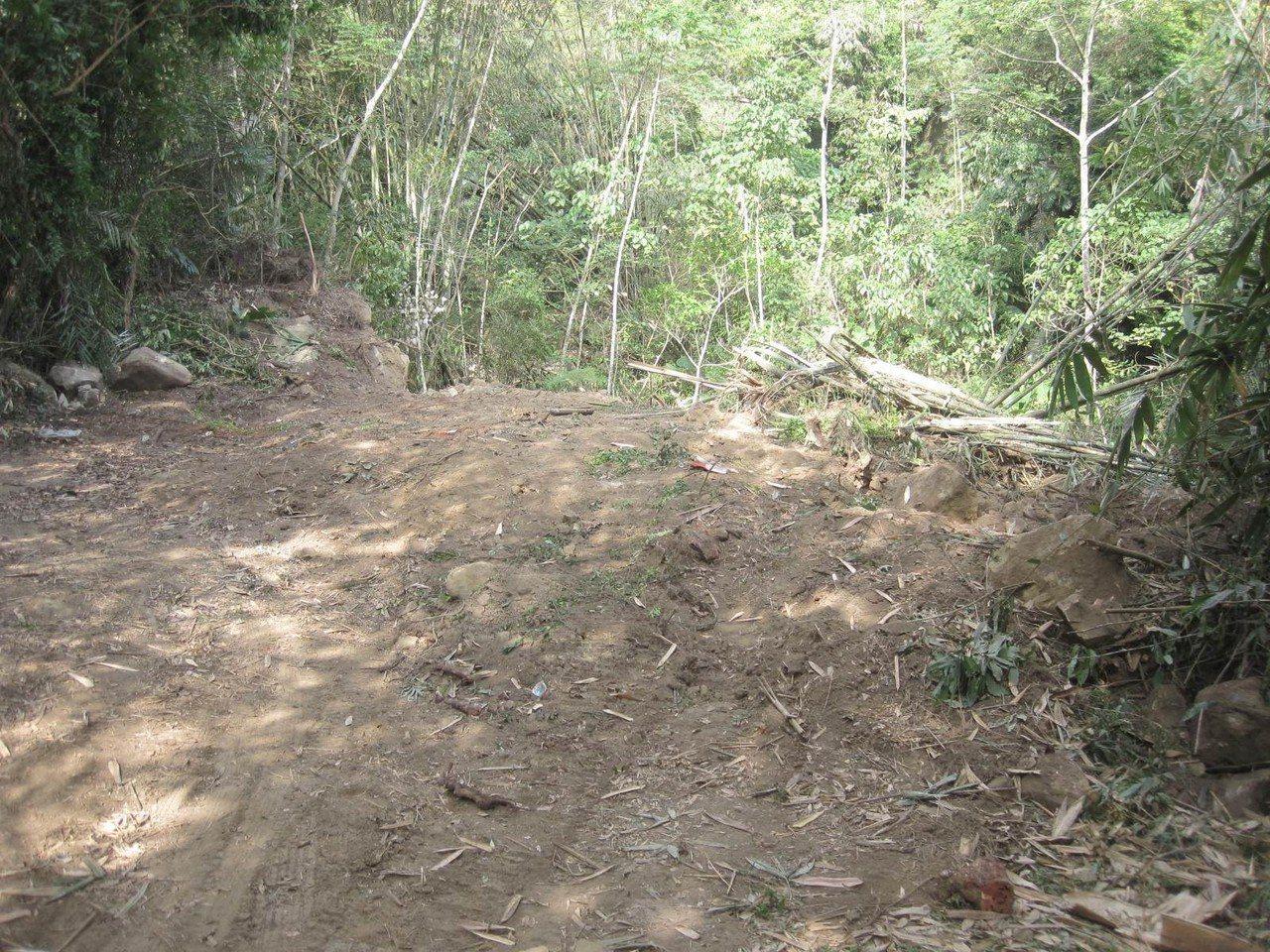 盜伐集團在大埔山林地開路,嚴重破壞水土保持。記者謝恩得/翻攝